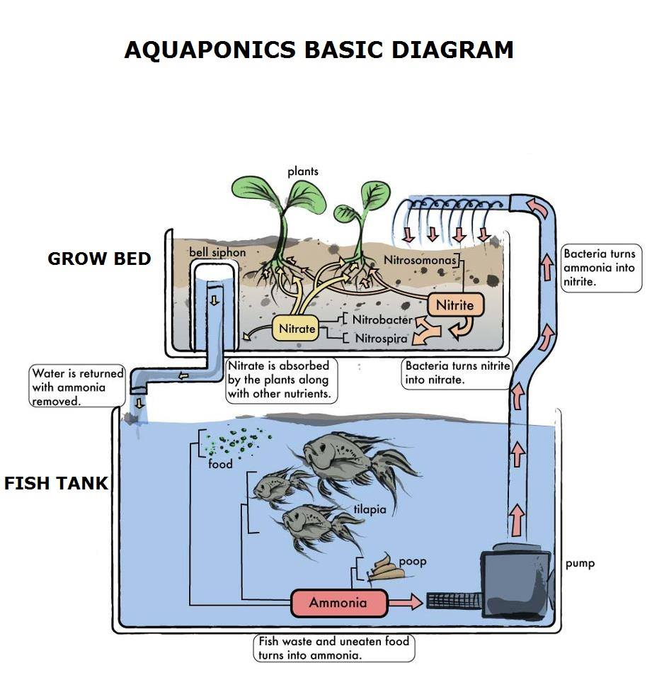 medium resolution of why is the nitrogen cycle so important to aquaponics