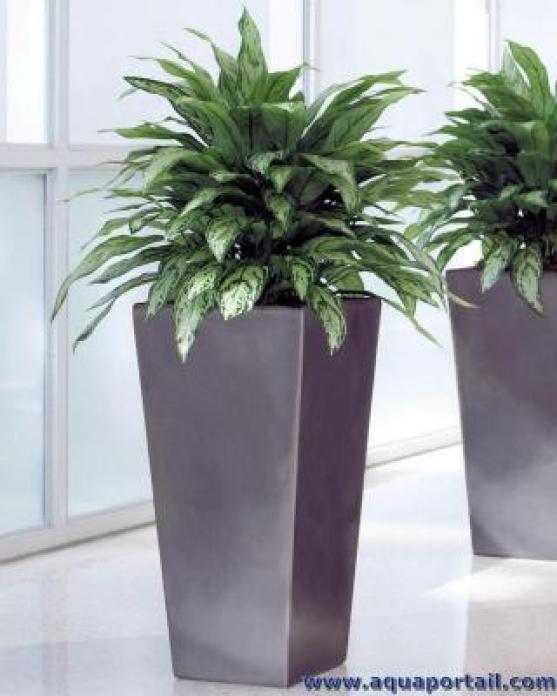 Une plante artificielle en intérieur