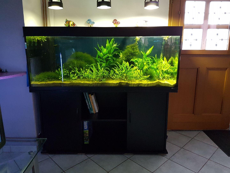 cara membuat filter aquarium sendiri tanpa listrik slidehd co. Black Bedroom Furniture Sets. Home Design Ideas