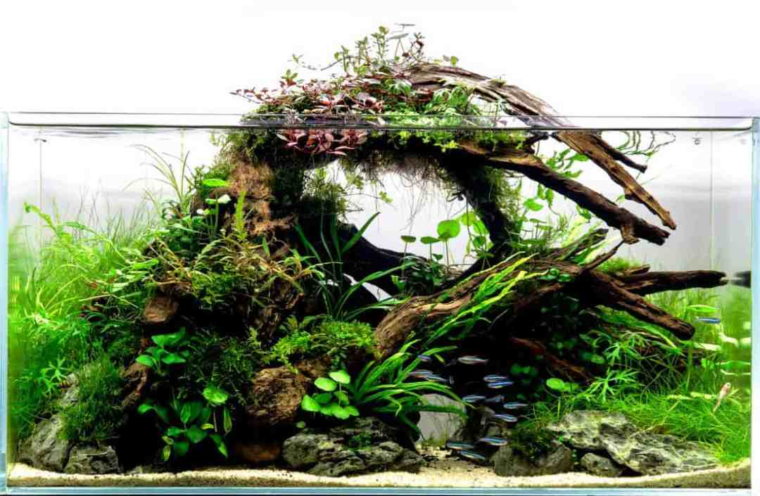 Aquarium driftwood aquariadise for Fish tank driftwood