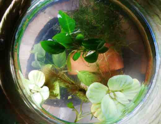 planted fish bowl