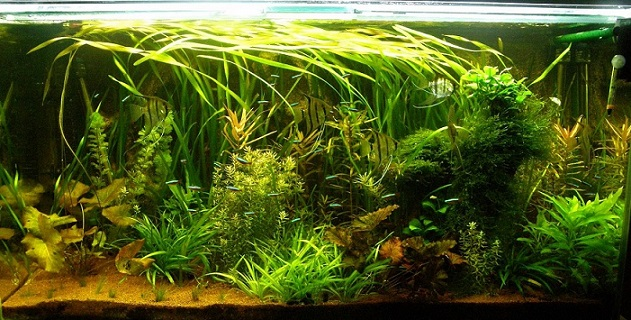 Articles Aquascaping L