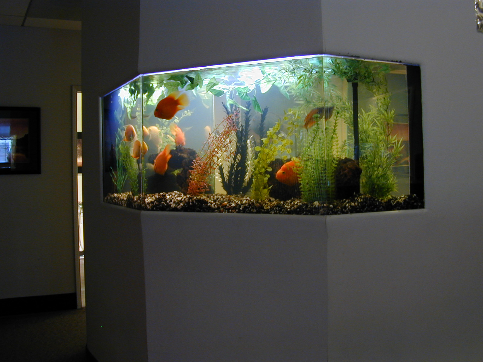 125 Gallon Freshwater Fish Tank, Aquarium Design, Marine