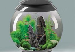 une table aquarium pas cher