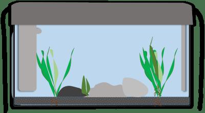 Aquarium einrichten: Wasser auffüllen