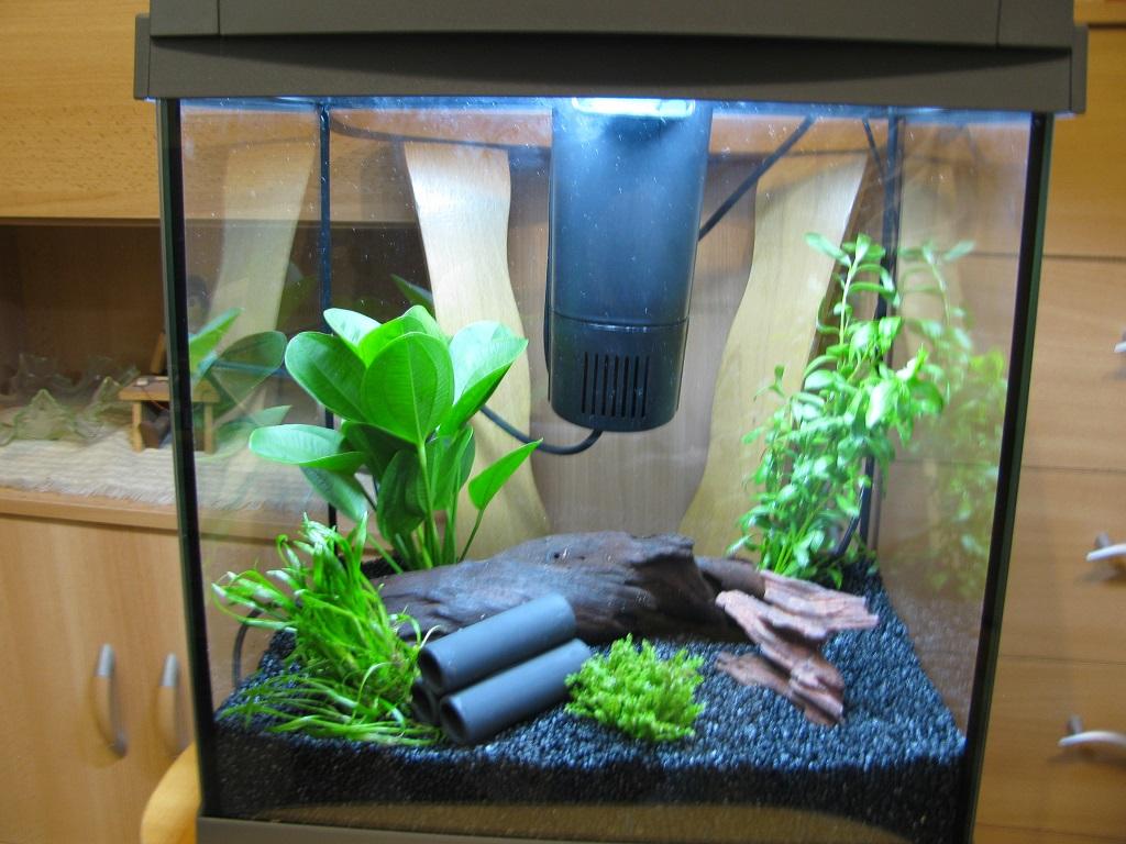 Nanoaquarium fr Aquariumfische jetz auch im Blog