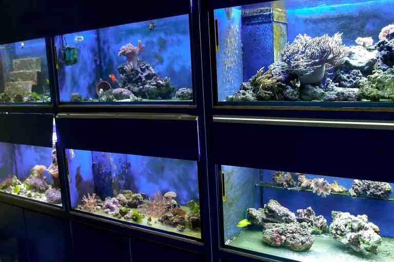 Aquariums in pet store using the best aquarium safe silicone