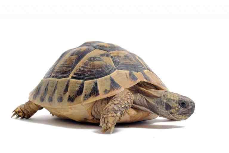 Best filters to turtle tanks help keep pet turtles happy