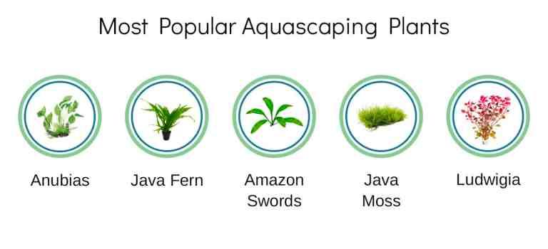 aquascaping survey result - popular plants