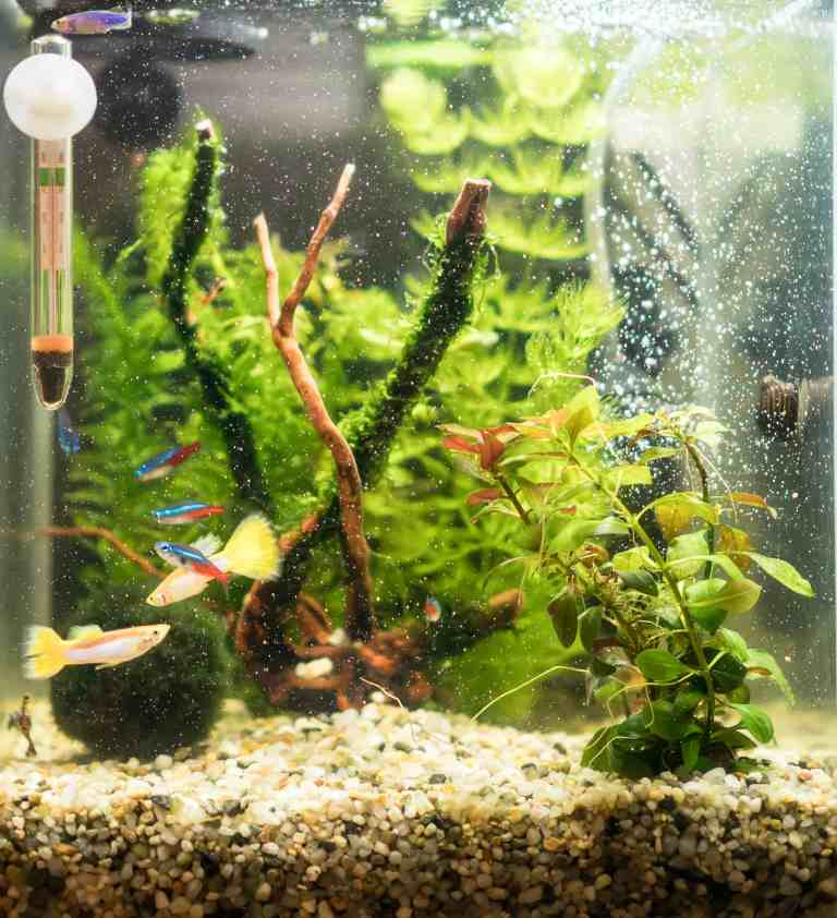Nano tank using best aquarium thermometer option - submersible with suction cup - that doesn't take up a lot of space