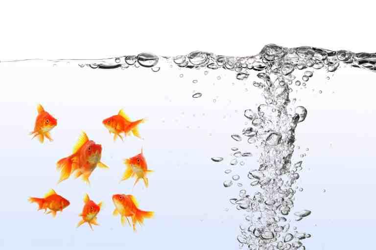 Using the best aquarium air pump for goldfish tank