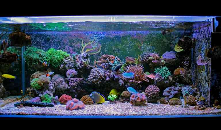 saltwater aquarium using protein skimmer