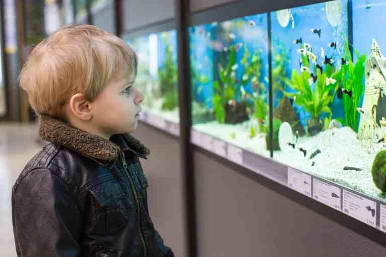 fish tanks for kids survey