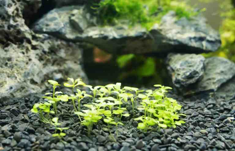 aquascaped tank with plants using tweezers