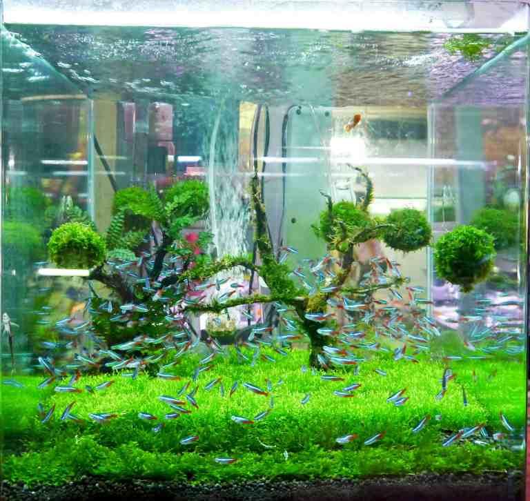 Clean planted tank because of best aquarium UV sterilizer