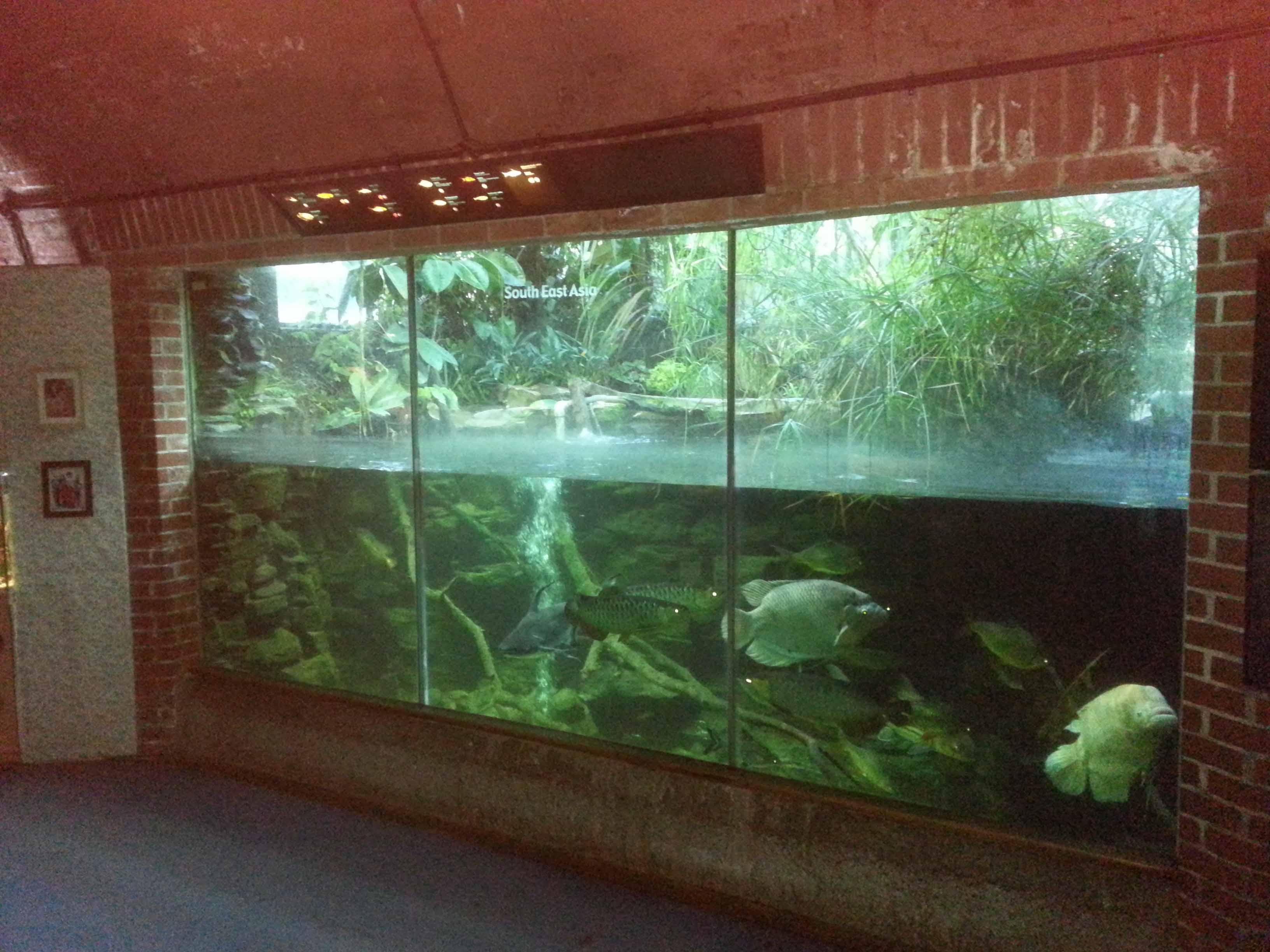 Bristol Zoo Aquarium  Fresh Water Displays Refurbishment