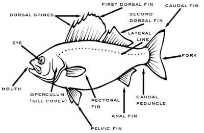 Aquarium and Tropical Fish Tank Tips, Tricks, Podcast