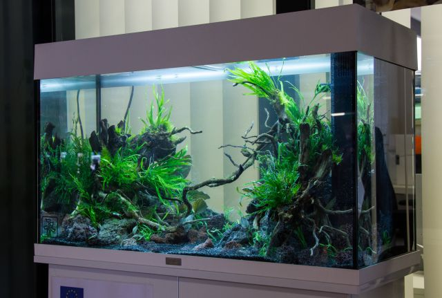 aquariums with or without cover