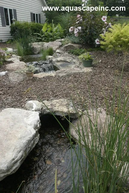 Maintaining Fish Pond