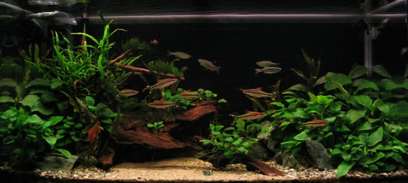 Aquascaping World Competition  Gallery  Anubias Paradise