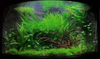 Aquascaping World Competition - Gallery - Trigon Island by ...