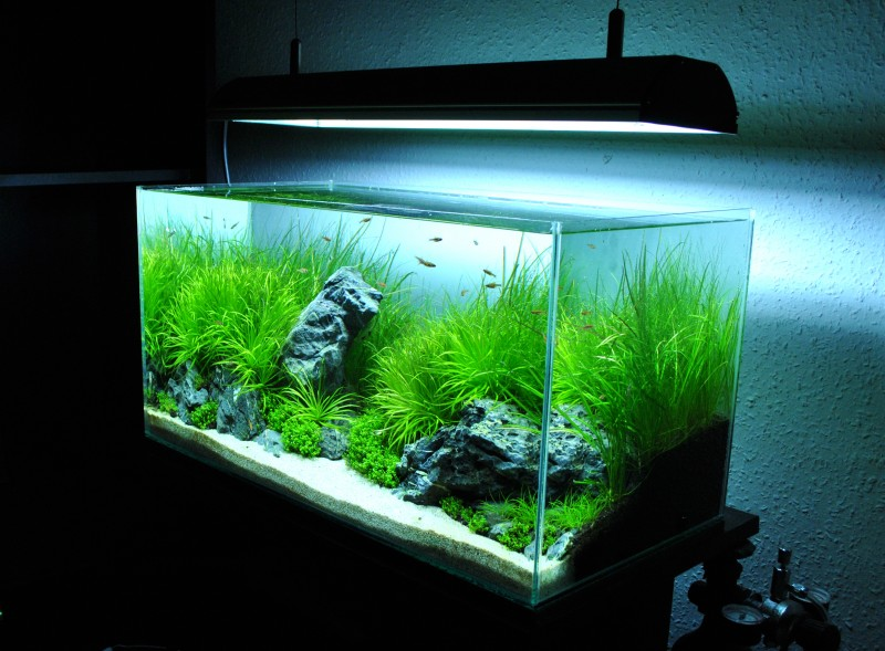 Aquascaping World Competition  Gallery  Territory of hiding cliffs by Jnos Gerg Simon