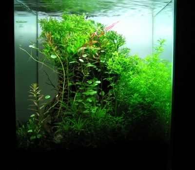 Aquascaping World Competition - Gallery