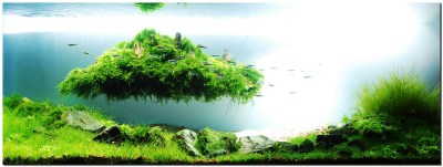 Floating Island - The Planted Tank Forum