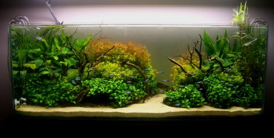 AquaScaping World Magazine - Down the River