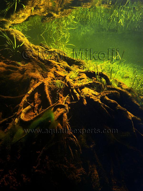 Tropical Fish Plants