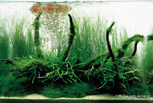 aquarium driftwood aquarium driftwood