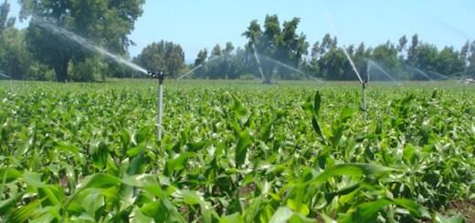Irrigation du maïs en période de sécheresse