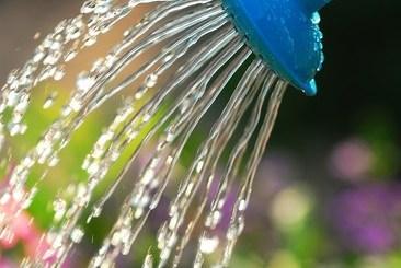 L'eau de pluie est un geste écocitoyen