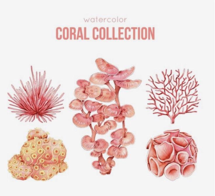 Inspiración Coral