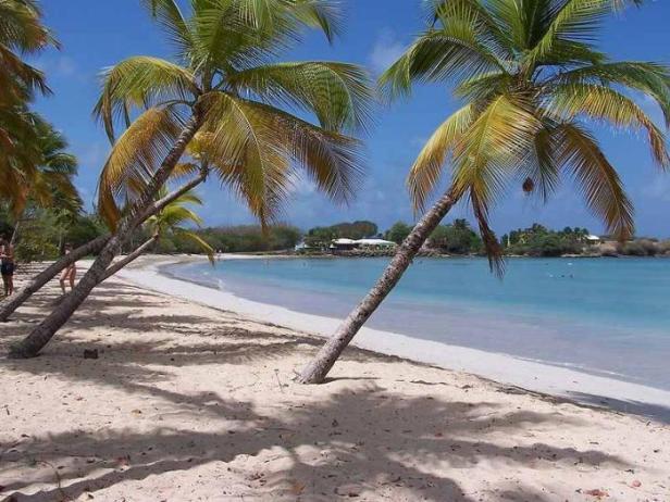 شاطىء بجزيرة مارتينيك فى الكاريبى