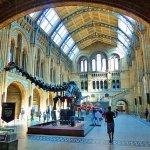متحف التاريخ الطبيعي في لندن 2016