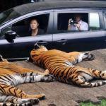 الحياة البرية والبحرية في اندونيسيا