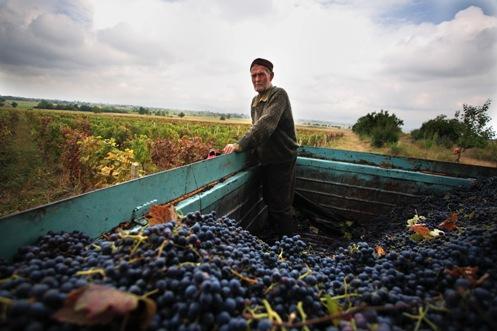 مصانع النبيذ