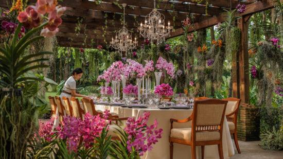 تايلند حديقة الاوركيد