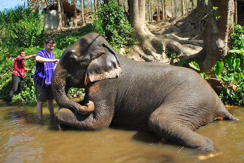 كامب الافيال فى تايلند