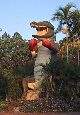 The Big Boxing Crocodile, NT
