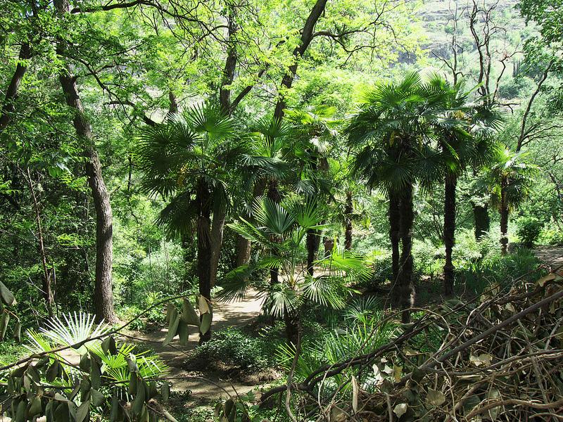 الحديقة النباتية الوطنية