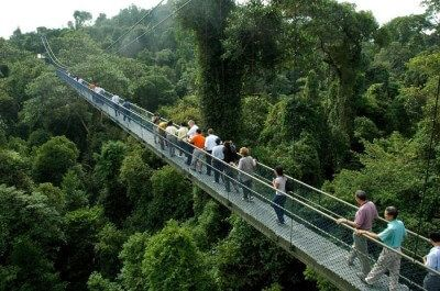 The Sothern Ridges Tree-top walk