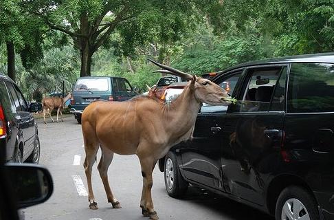 حديقة تامان سفاري Taman Safari