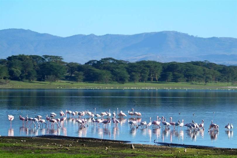 بحيرة نيفاشا