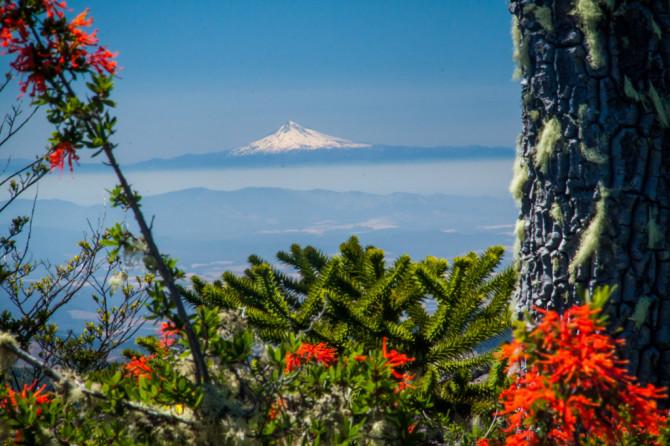 حديقة Conguillío الوطنية