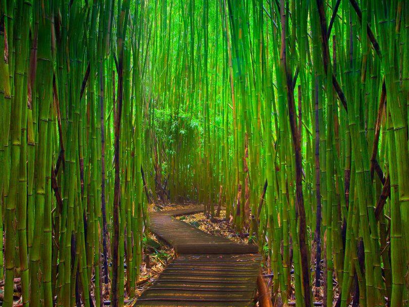 غابات الخيزران بهاواي