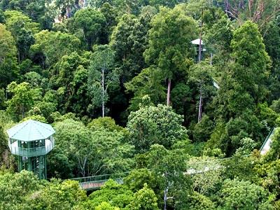 غابات ولاية صباح