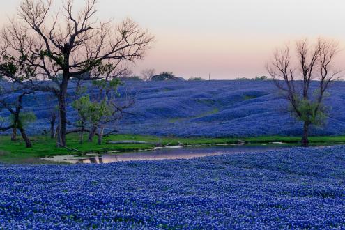 مدينة اينيس في تكساس