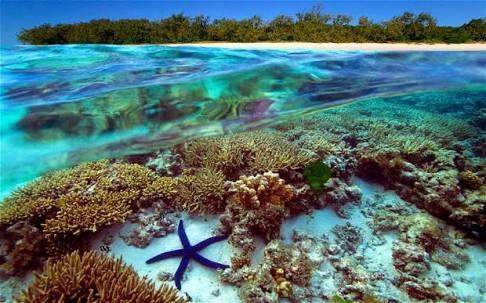 الحاجز المرجانى العظيم فى أستراليا